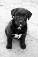 feminiteassumee chien femme